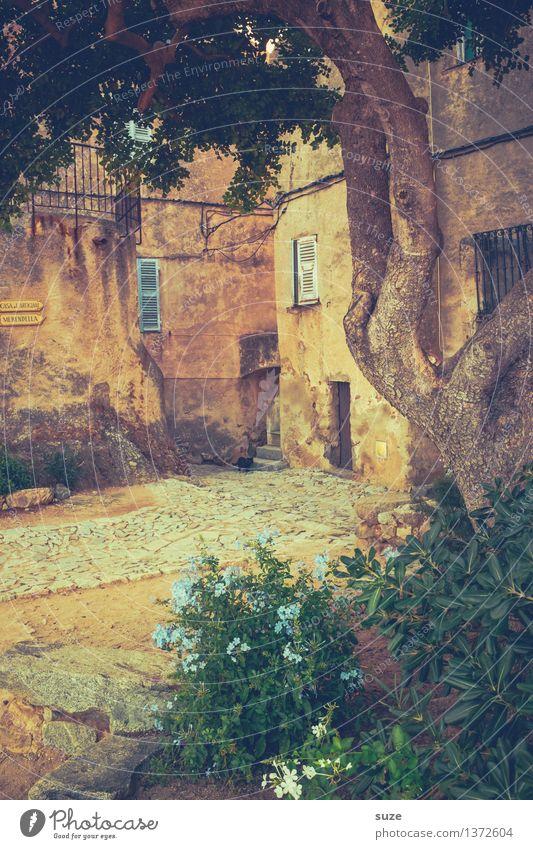 Hofgarten Natur Ferien & Urlaub & Reisen alt Sommer Baum Wärme natürlich außergewöhnlich Garten Dekoration & Verzierung Idylle Europa Kultur einzigartig