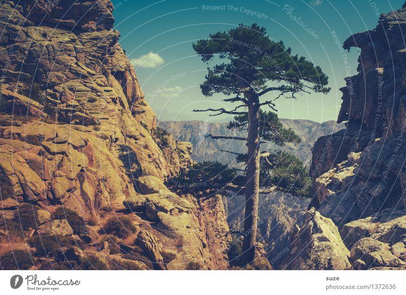 Naturtalent Ausflug Abenteuer Berge u. Gebirge wandern Landschaft Pflanze Urelemente Sommer Baum Felsen außergewöhnlich groß trocken wild Willensstärke