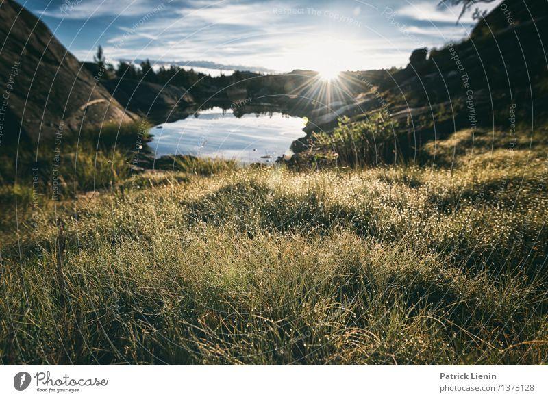 Morgen in der Sierra Himmel Natur Ferien & Urlaub & Reisen Pflanze Sommer Wasser Baum Sonne Blume Landschaft Wald Berge u. Gebirge Umwelt Wiese Gras Tourismus