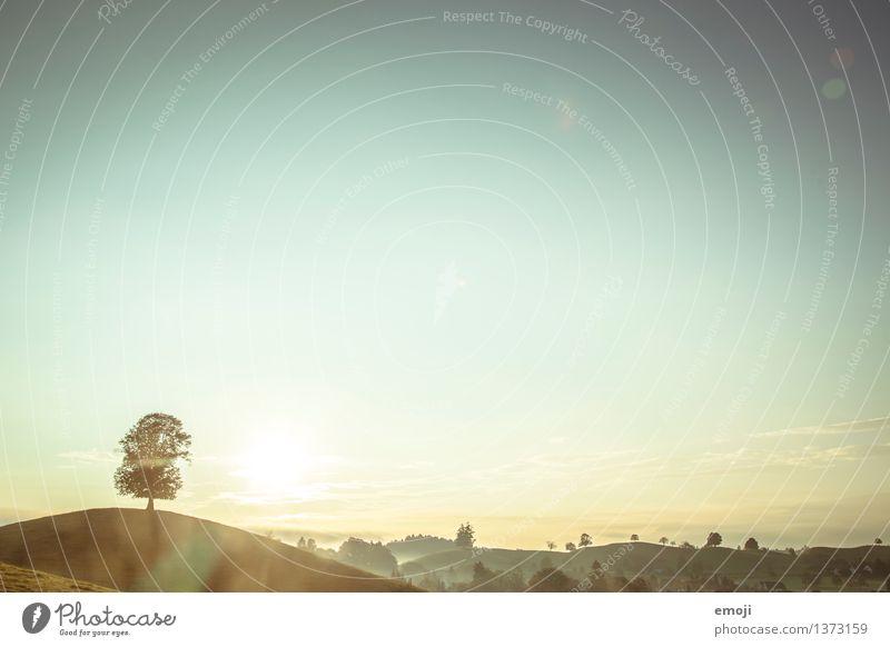 * Umwelt Natur Landschaft Himmel Wolkenloser Himmel Herbst Schönes Wetter Baum Hügel natürlich blau gold grün Farbfoto Außenaufnahme Menschenleer