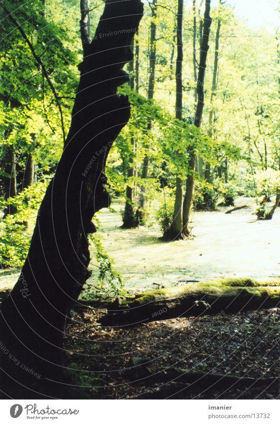 moor im norden Baum Sommer Wald Moor Laubwald