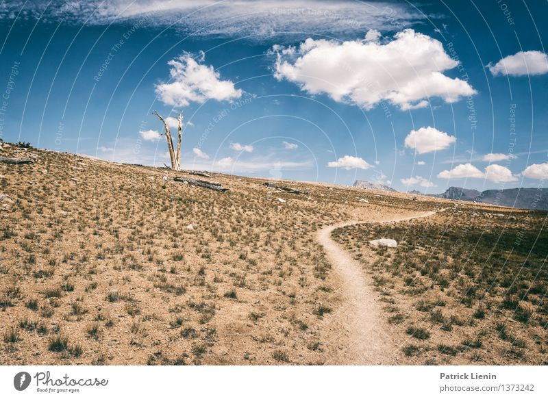 Bighorn Plateau Sinnesorgane Erholung ruhig Ferien & Urlaub & Reisen Sommer Berge u. Gebirge wandern Umwelt Natur Landschaft Urelemente Erde Luft Himmel Wolken