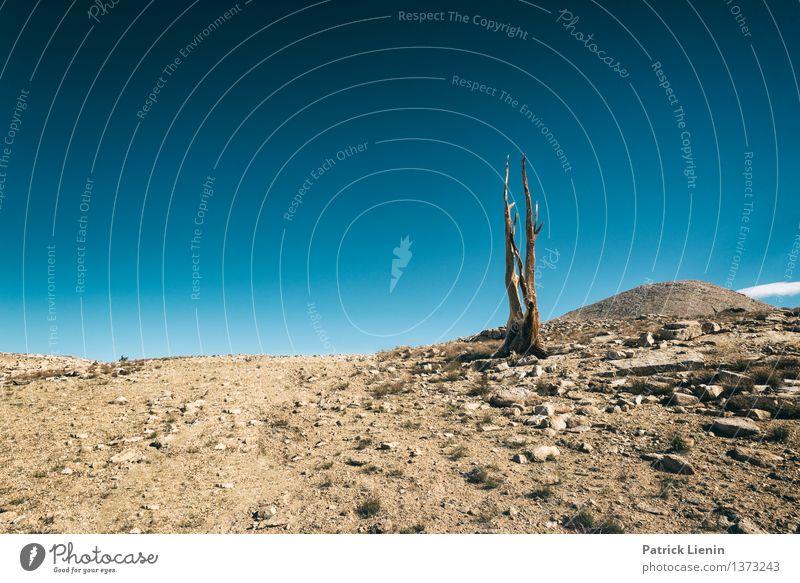 Last Tree Standing Ferien & Urlaub & Reisen Umwelt Natur Landschaft Pflanze Urelemente Erde Sand Luft Himmel Wolkenloser Himmel Sonne Sommer Klima Klimawandel