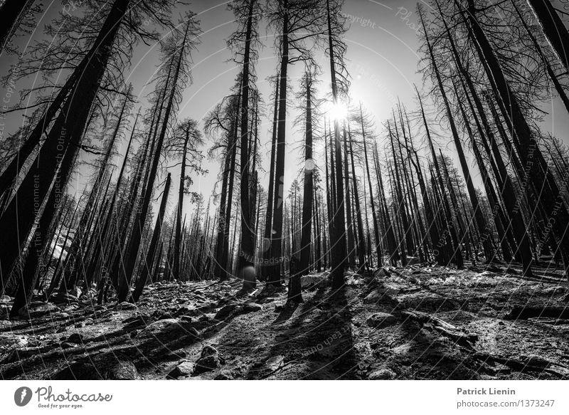 Abgebrannt Natur Ferien & Urlaub & Reisen Pflanze Sommer Sonne Baum Wald Umwelt Wärme Bewegung Stein Tourismus Wetter Zufriedenheit Ausflug Klima