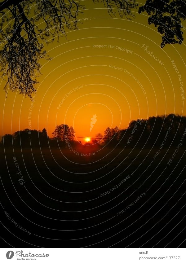 early morning | zannreis Kerl Mann maskulin Stimmung Körperhaltung Lampe Wiese Feld Ferne Sonnenaufgang Morgen Baum Baumkrone Blatt Horizont Silhouette schwarz