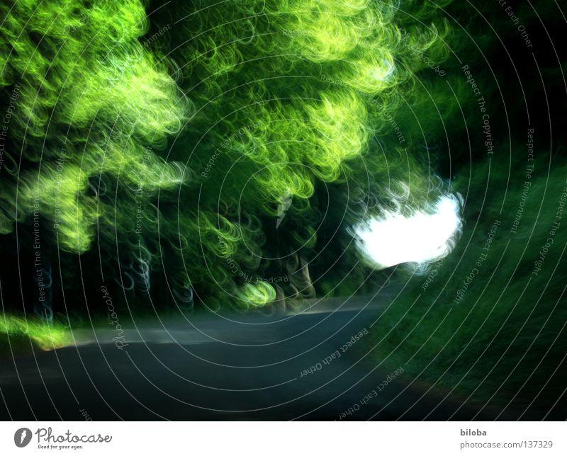 Forrest race Natur grün Baum Pflanze Blatt Tier Wald Straße Geschwindigkeit fahren Lichtblick