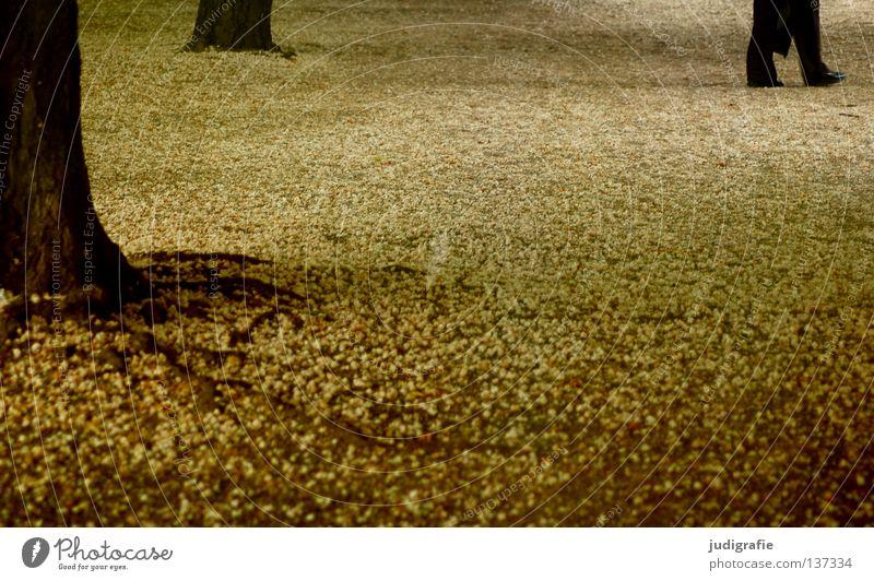 Berlin Mensch Baum Blüte Garten Holz Fuß Park Beine gehen laufen Spaziergang Baumstamm Wurzel Kastanienbaum