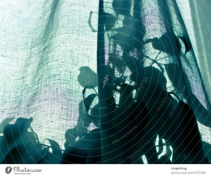 hinterm vorhang Gardine Vorhang leicht weich zart durchsichtig Pflanze Blatt grün Baum Faltenwurf Stoff Fenster Dekoration & Verzierung Seil sanft heimpflanze