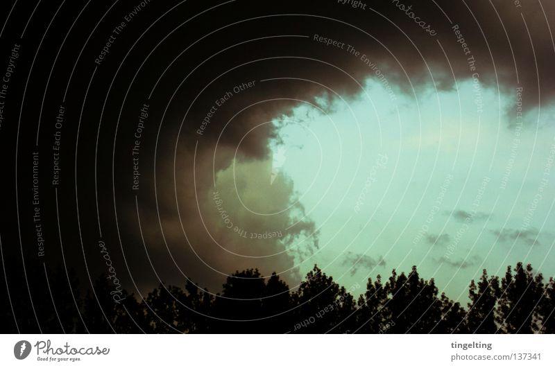 das große schwarze Wolken Gewitterwolken bedrohlich Baum Horizont Ferne dunkel Himmel blau Kontrast Natur