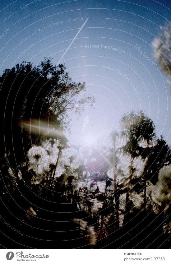 Guten Morgen Sonntag aufgehen Löwenzahn Pflanze frisch Baum Wildnis Flugzeug Kondensstreifen Gegenlicht Beleuchtung umgefallen Kornfeld Spielen ökologisch