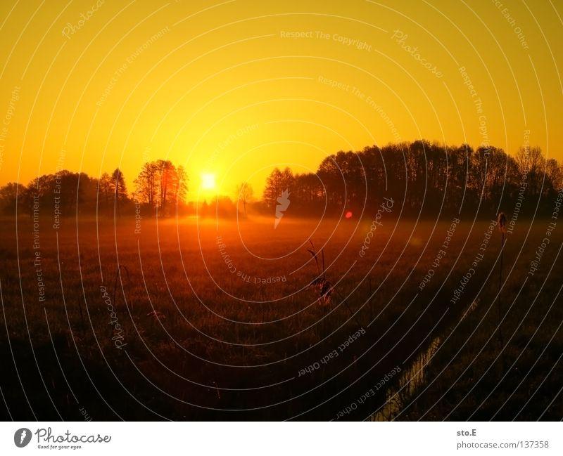 early morning | nebel pt.2 Kerl Mann maskulin Stimmung Körperhaltung Lampe Wiese Feld Ferne Sonnenaufgang Morgen Baum Baumkrone Blatt Horizont Silhouette
