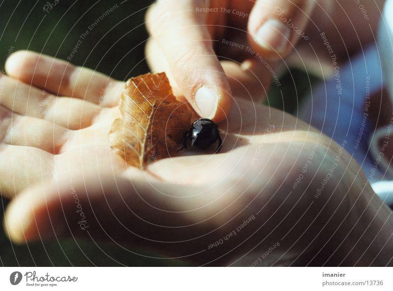Der Käfer auf der Hand Blatt Nahaufnahme Verkehr