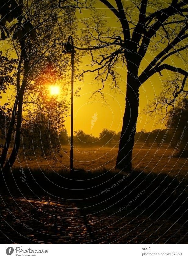 early morning | aufgereiht Lampe Laterne Laternenpfahl Wiese Feld Ferne Sonnenaufgang Morgen Baum Baumkrone Blatt Horizont Silhouette schwarz Schatten