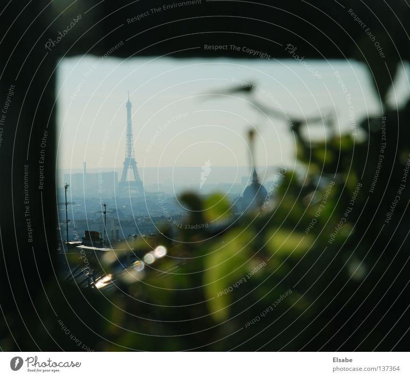 Draußen am Balkon Paris Pflanze Tour d'Eiffel Sonnenlicht Sonnenuntergang Licht Sonnenstrahlen Himmel Sommer Sommerabend lau Physik Morgen Abend Stadt Aussicht