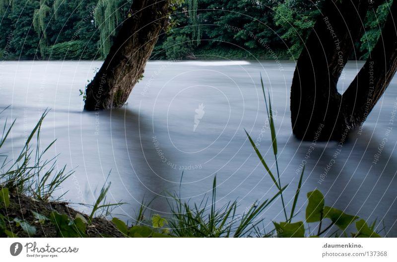 gegen den Strom Baum Wiese Gras Pflanze Nebel Sträucher Blatt Wellen Langzeitbelichtung Baumrinde Geschwindigkeit Kraft stark protestieren Wasser Fluss Erde