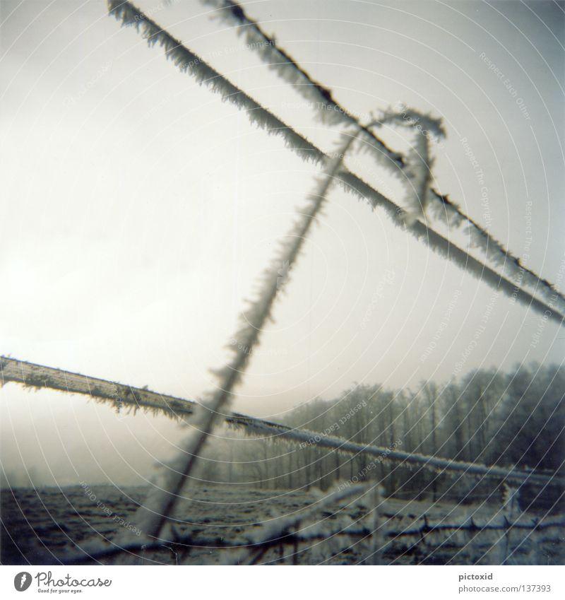 schneegrenze Zaun Wald Wiese gefroren kalt Eis Winter Schneelandschaft Eisblumen trist Einsamkeit Dämmerung Holga Frost Natur Kristallstrukturen Lomografie