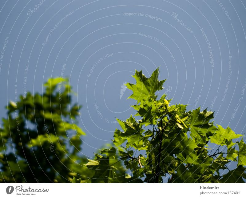 Blätter, die die Welt bedeuten Himmel grün schön blau Sommer Blatt ruhig kalt Gefühle Frühling Denken Wärme Wind frisch Physik Klarheit