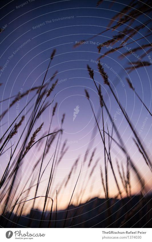 Stimmung II Himmel Natur Pflanze blau weiß Landschaft schwarz Berge u. Gebirge Umwelt grau orange violett Halm Schweiz Nachthimmel