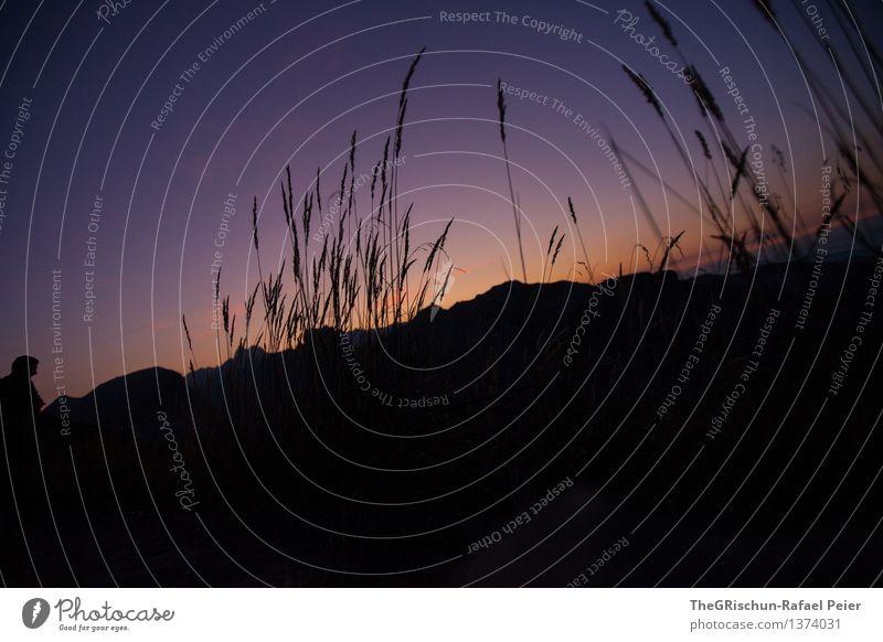 Stimmung Umwelt Natur Landschaft Pflanze violett orange schwarz Nachthimmel Gras Silhouette Sträucher Himmel dunkel Außenaufnahme Farbfoto Menschenleer