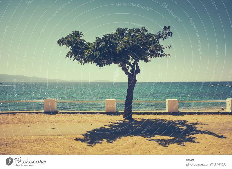 Beschattung Natur Ferien & Urlaub & Reisen blau Sommer Baum Meer Erholung Einsamkeit Ferne gelb Wärme Küste klein Sand Horizont Wachstum