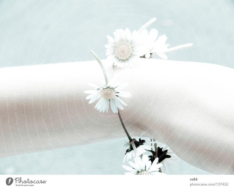 Geblendet Blüte Blume Frau Hand Leuchtkraft Sonnenblume blenden schön Arme hell leuchten