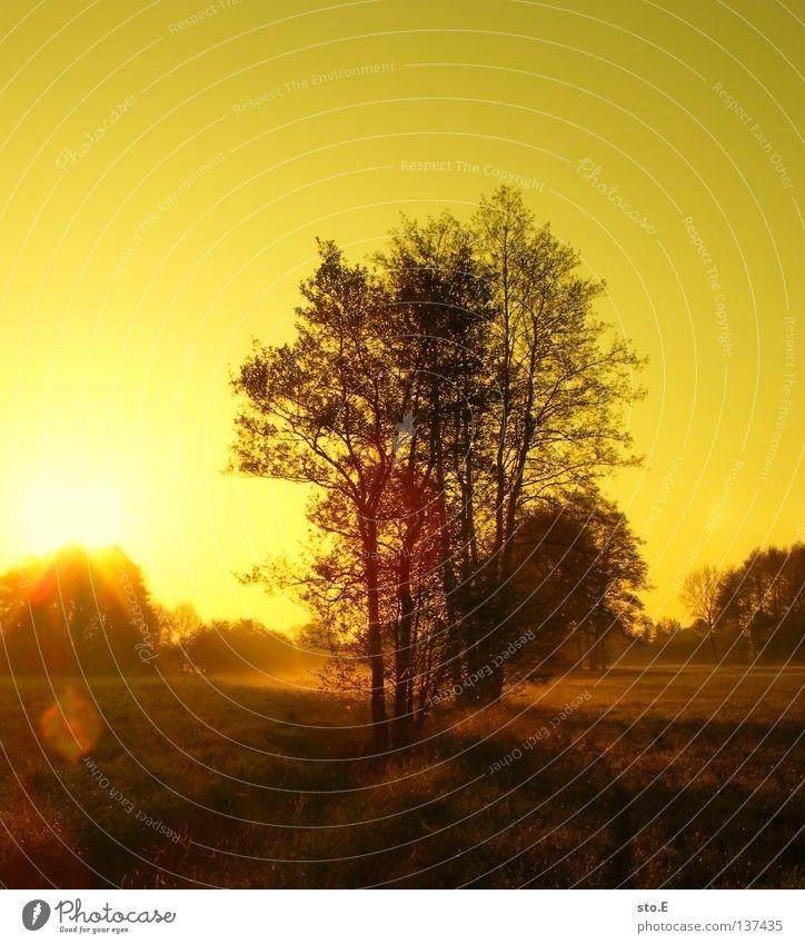 early morning | fließ pt.3 Stimmung Körperhaltung Lampe Wiese Feld Ferne Sonnenaufgang Morgen Baum Baumkrone Blatt Horizont Silhouette schwarz Schatten