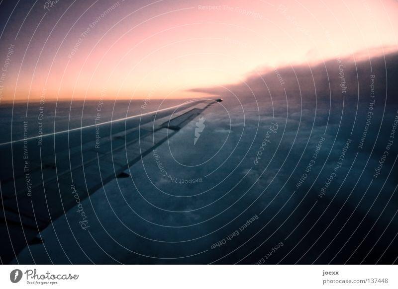 Hin und weg Himmel Sommer Ferien & Urlaub & Reisen Wolken Flugzeug gehen fliegen Geschwindigkeit Tragfläche kommen heimwärts Abdeckung Landeklappe Reisefieber