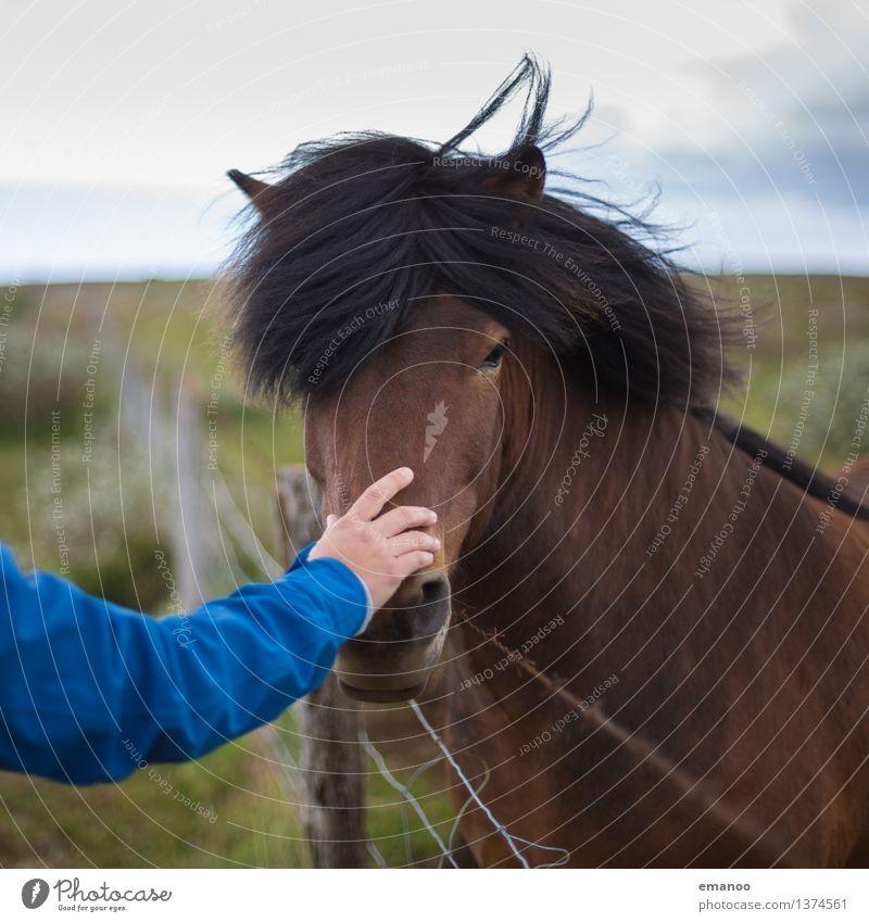 Schnauze halten Ferien & Urlaub & Reisen Tourismus Freiheit Landschaft Gras Wiese Feld Tier Nutztier Pferd Tiergesicht 1 festhalten streichen Glück weich braun