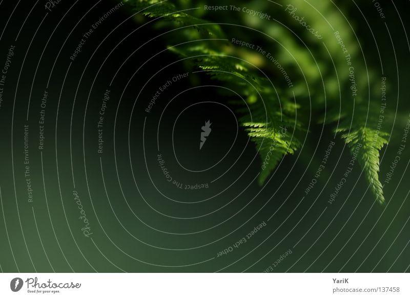 touch Natur grün Pflanze Farbe schwarz ruhig Erholung dunkel Wachstum Hoffnung Wunsch weich Ast Zweig Tiefenschärfe sanft
