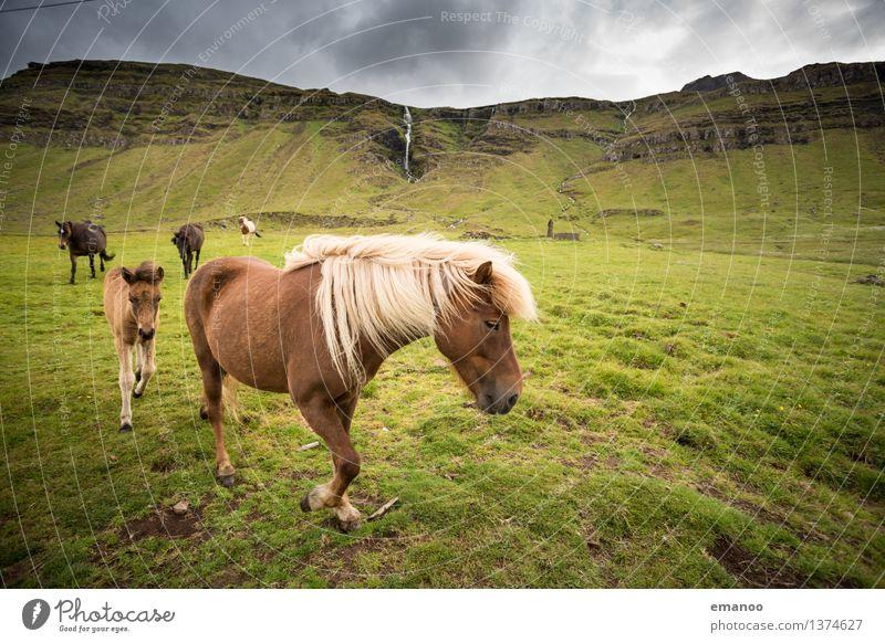 Alles Isi Ferien & Urlaub & Reisen Tourismus Ferne Freiheit Berge u. Gebirge Umwelt Natur Landschaft Wolken Gras Wiese Felsen Wasserfall Tier Nutztier Pferd 4