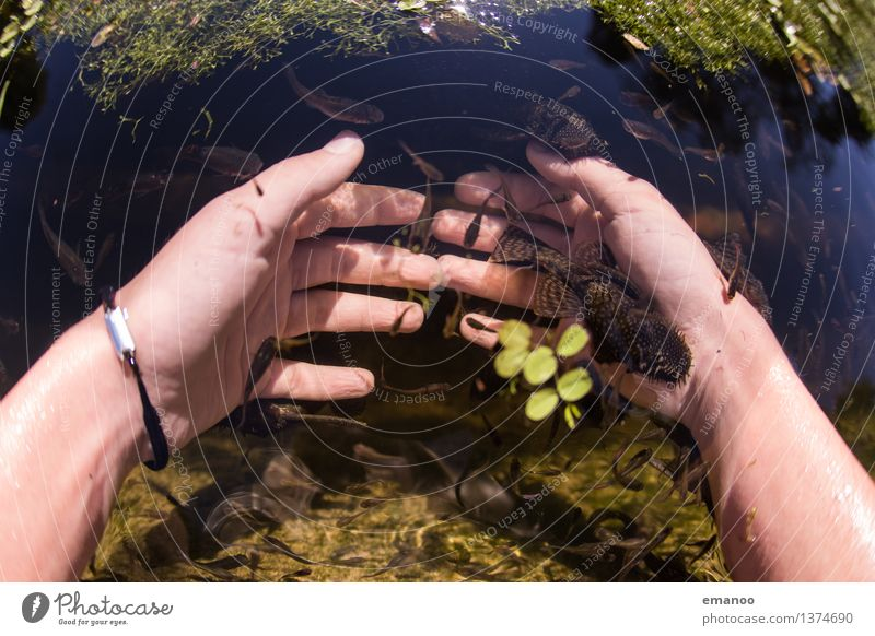 Knabberfischmaniküre Mensch Kind Jugendliche schön Wasser Junge Frau Erholung Hand Freude Essen feminin Lifestyle Haut Wellness Fisch Krankheit