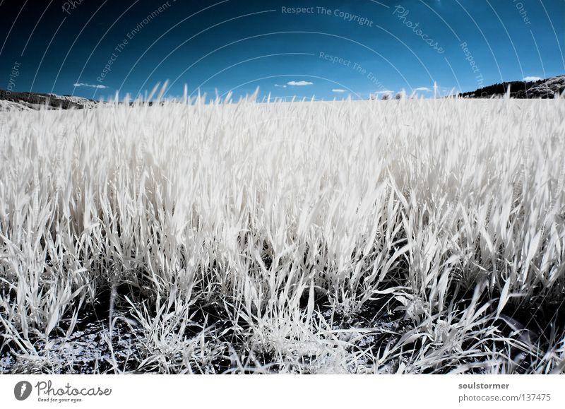 weites Feld im Frühling Infrarotaufnahme Wiese Personenzug Farbinfrarot fremd Gras Löwenzahn Gegenlicht Reflexion & Spiegelung weiß schwarz Blatt Halm