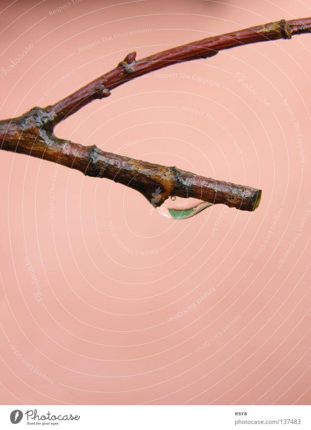 drop Baum Wassertropfen Regen Natur Ast Detailaufnahme Makroaufnahme Leben