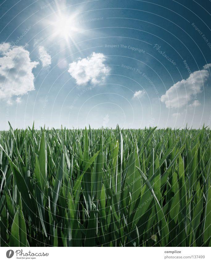 Auf dem Lande Natur blau grün Pflanze Sonne Sommer Wolken Ferne Wiese Wärme Gras Frühling springen Park Horizont Deutschland