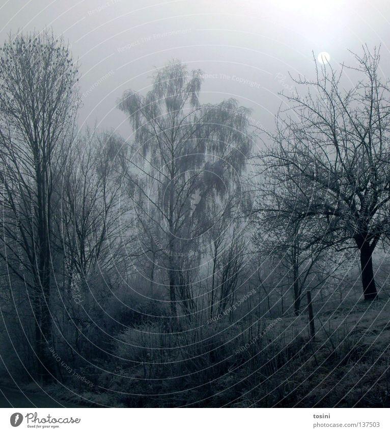Winterlandschaft Eis kalt Baum Ast Mond Himmel weiß Wege & Pfade Zaun Beleuchtung ruhig Natur Wiese Schneelandschaft Nacht gefroren Jahreszeiten tosini