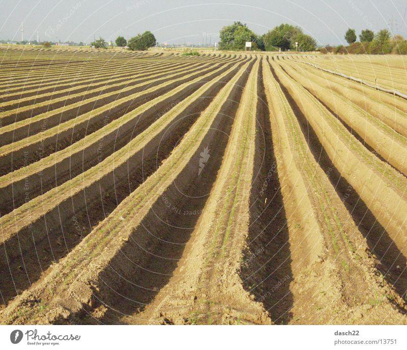 linien Feld Landwirtschaft Amerika Furche Spargel Pflug
