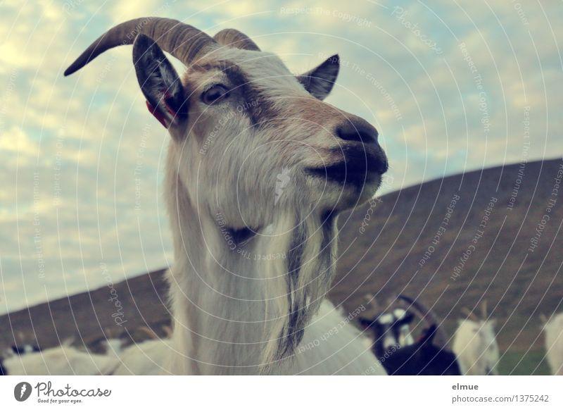 Mecker ja nicht rum! Natur Zufriedenheit Kraft stehen Perspektive warten Kommunizieren beobachten Neugier Kontakt entdecken hören Duft Wachsamkeit Island Erwartung