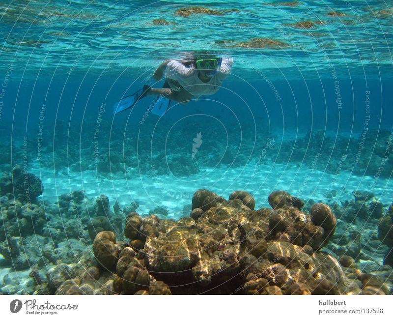 Malediven Water 17 Wasser Meer Unterwasseraufnahme tauchen Riff Schnorcheln