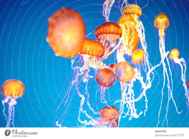 Super Quallen Wasser Meer Lampe orange tauchen Tiefsee