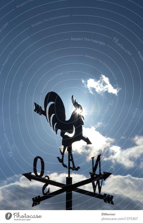 Wetterhahn Haus Garten Dekoration & Verzierung Messinstrument Kunst Kunstwerk Skulptur Architektur Umwelt Urelemente Luft Himmel Klima Schönes Wetter Unwetter