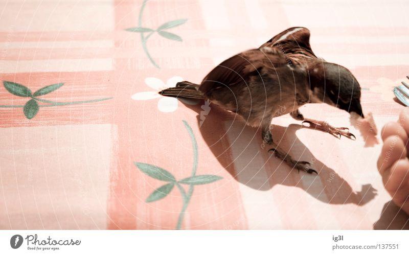 Vorhut Volker Ferien & Urlaub & Reisen Tier Vogel Kraft fliegen Arme Energiewirtschaft Armut Ernährung Spaziergang Flügel Wunsch festhalten Lebewesen Müll