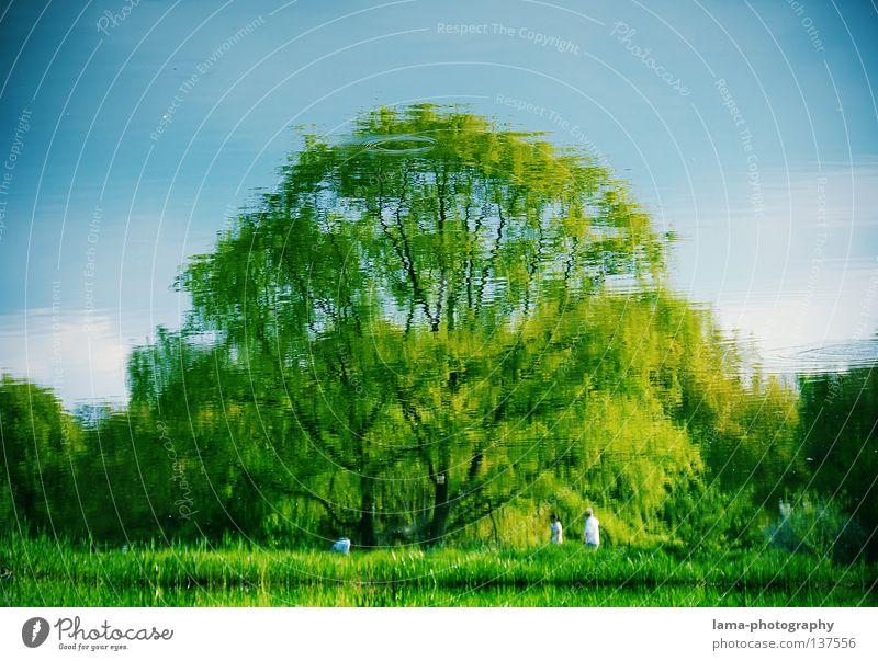 Grüne Lunge Amerika Central Park Baum grün Wiese Erholung See Reflexion & Spiegelung Pfütze Sauerstoff atmen Gras Manhattan Spaziergang Blatt Laubbaum Sommer