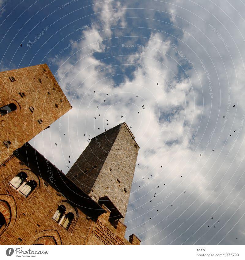 Der Schwarm blau Haus Wand Architektur Gebäude Mauer Religion & Glaube braun Vogel Fassade Hochhaus Platz Italien Turm historisch Vergangenheit