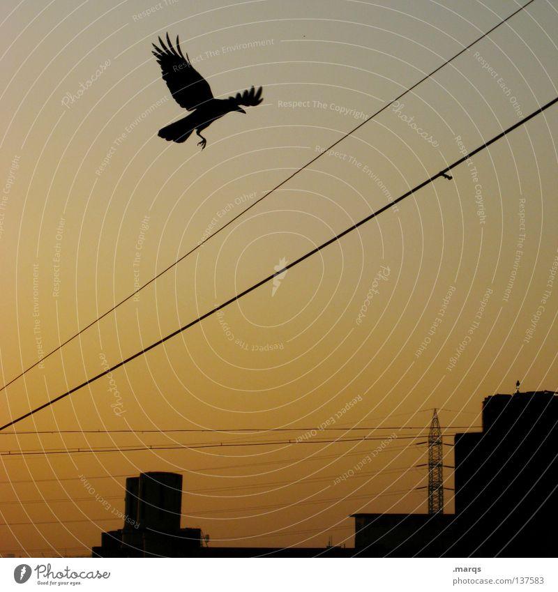 The Early Bird Dämmerung Morgen spät Stadt Fluchtpunkt Silhouette Elektrizität Sommer Strommast Vogel Abheben Färbung Verlauf Flügel Sonnenaufgang