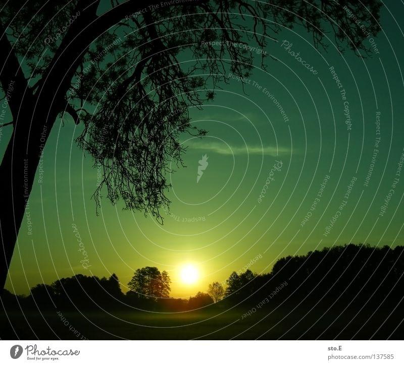 early morning | nebel pt.3 Wiese Feld Ferne Sonnenaufgang Morgen Baum Baumkrone Blatt Horizont Silhouette schwarz Schatten verdunkeln Nebel ruhig grün Grünstich