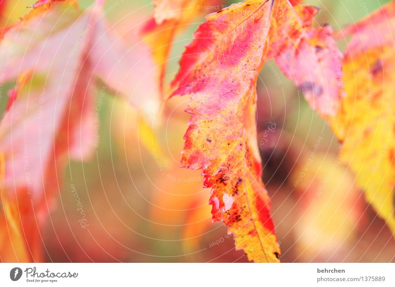 herbst Natur Pflanze Herbst Regen Baum Blatt Garten Park Wald schön Wärme orange Traurigkeit Trauer welk Vergänglichkeit Tropfen Farbfoto Außenaufnahme