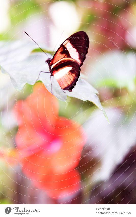hibiskusblüte Natur Pflanze schön Sommer Blume Erholung Blatt Tier Blüte Frühling Wiese klein Garten außergewöhnlich fliegen orange