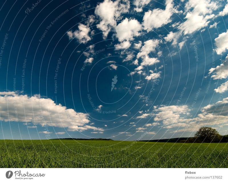 Grün und Blau... III Natur grün Ferne Landschaft Feld Ackerbau Himmel malerisch himmelblau Wolken Wolkenhimmel Wolkenformation Wolkenfeld Wolkenfetzen
