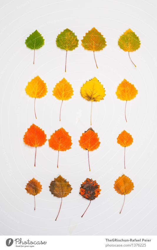 Super Still Life | Circle of Life Natur braun mehrfarbig gelb gold grün orange rot schwarz weiß Blatt Herbst Super Stillleben färben Wunder ästhetisch