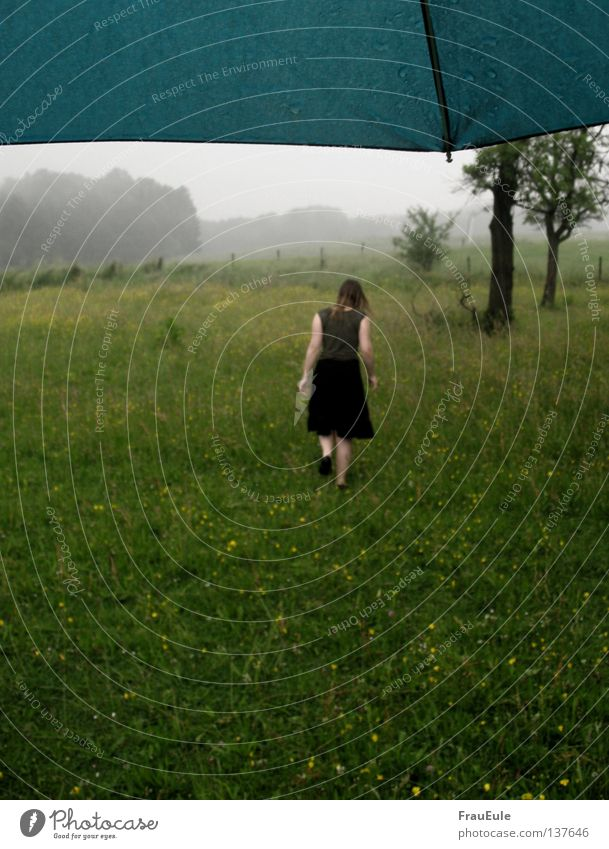 Sommerregen Frau Jugendliche Baum Blume Wolken Wiese Regen Nebel Wind Wetter nass Perspektive Regenschirm Sturm türkis